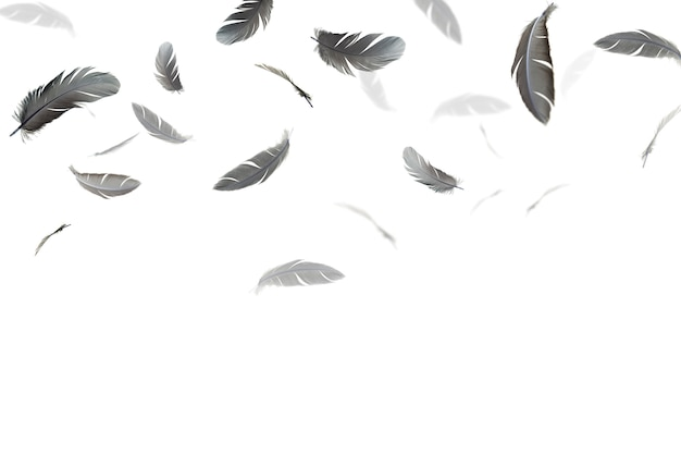 Black feathers float in the air, isolated on white background.
