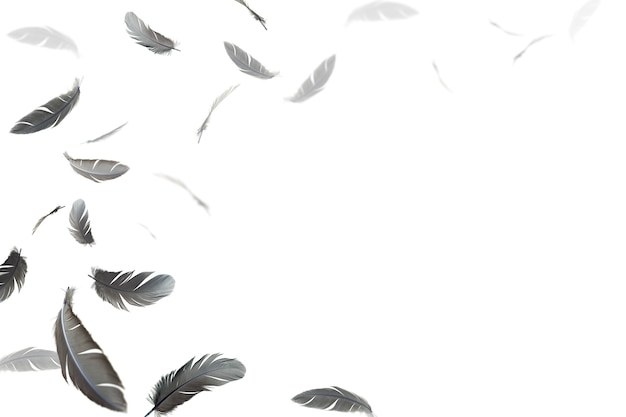 Black feathers floating in the air on white background.
