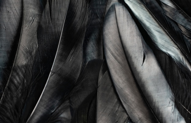 Black feathers texture background
