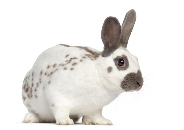 Черный огненный кролик, изолированные на белой поверхности
