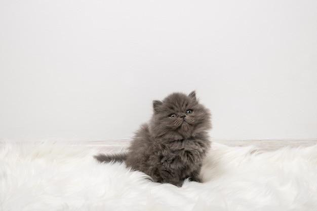 Black fluffy kitten sits on a white carpet in the room