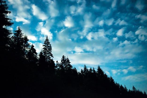 많은 별과 푸른 밤 하늘 위에 나무와 검은 숲. 배경에 milkyway