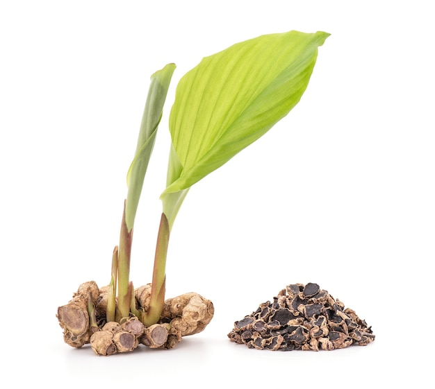黒いガランガルの根茎と乾燥したスライスが白い表面に分離されました。