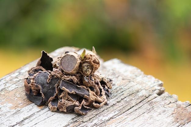 自然の表面に黒いガランガルの根茎と乾燥したスライス。