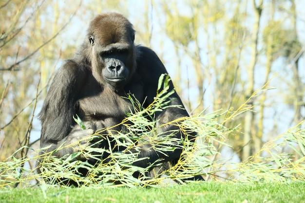 잔디와 식물로 둘러싸인 나무 앞에 서있는 검은 고릴라