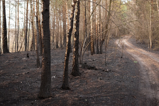 Black and gray ashes of burned plants in the national park