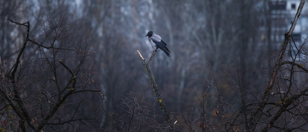 Black and grey crow sitting on a tree branch with a forest and buildings on the blurry background