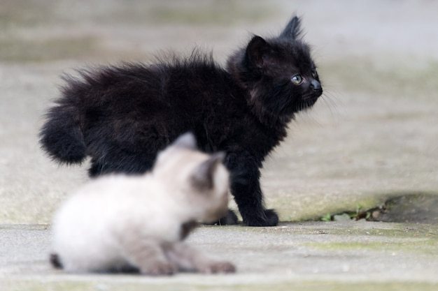 Black and grey newborn kittens outdoor. adorable small kittens outdoors
