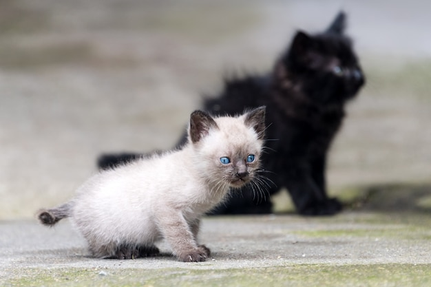 Black and grey newborn kittens outdoor.