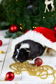 Black guinea pig among new year's decoration