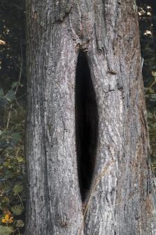 Черная выемка в дереве, большая выемка