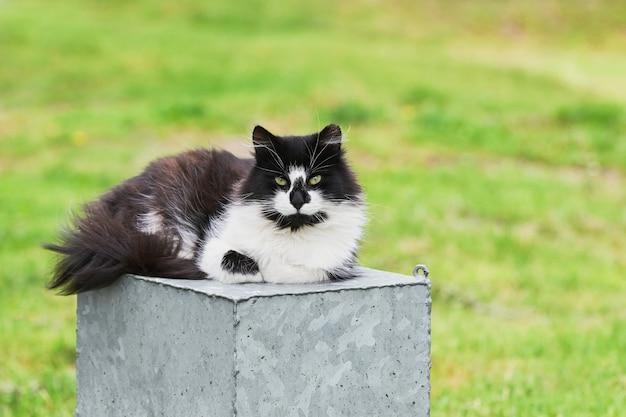 カメラを見ている黒いホームレス猫。コピースペース