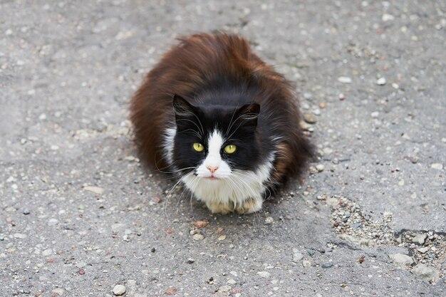 アスファルトの上に座ってカメラを見ている黒いホームレス猫。コピースペース