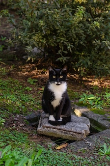 Black homeless cat with white neck sitting on the brick in the park. wildlife concept.