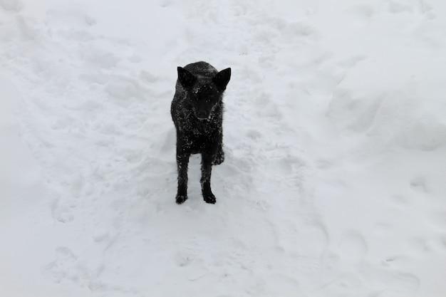 白い雪の中の黒いホームレス犬