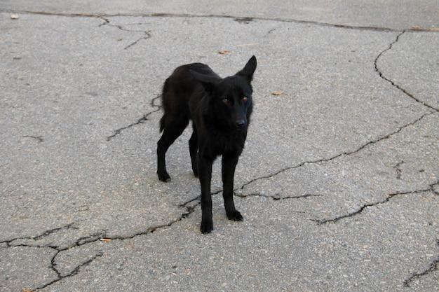都市公園の黒いホームレス犬
