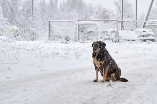 Черная бездомная собака на снегу в морозную погоду. собака замерзает на снегу