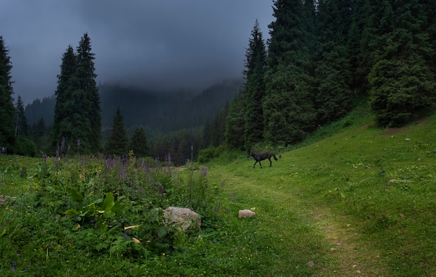 Black horse grazes in the foggy mountains in summer