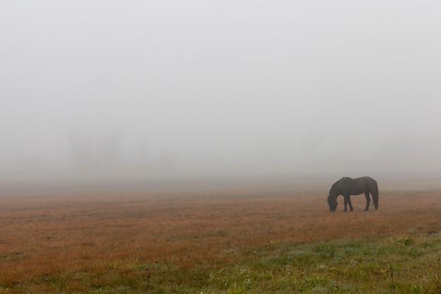 Черный конь на пастбище в осенний сезон