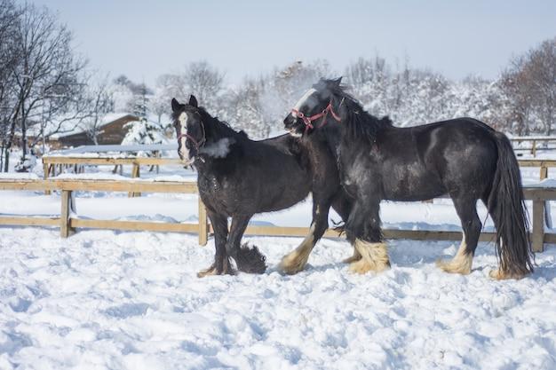 冬の黒い馬