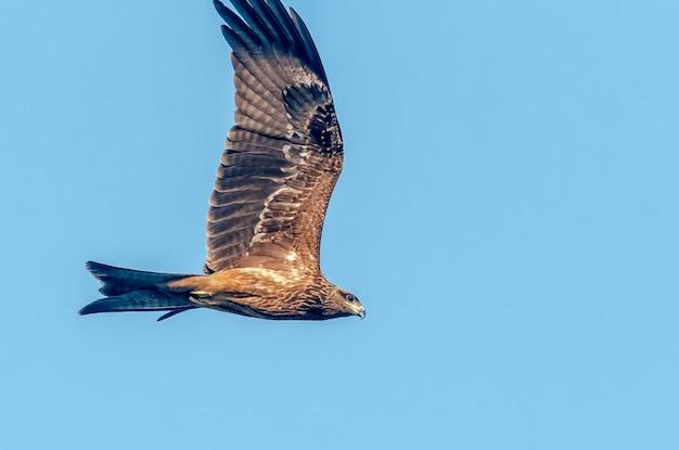 青い空を飛んでいる黒いkit