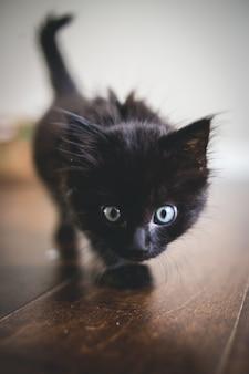Черный котенок крупным планом