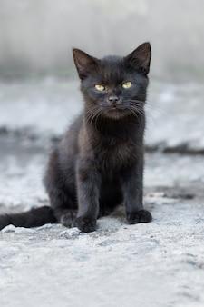 家の近くの路地に座っている黒い子猫、ぼやけた背景の黒い子猫