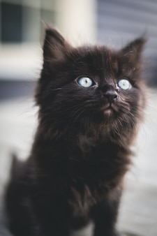 Black kitten on white surface