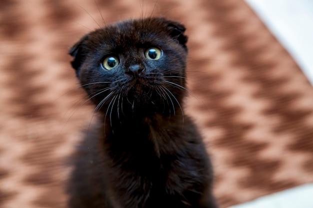 Черный котенок с забавной мордочкой сидит на кровати