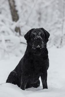 黒のラブラドールは、冬の風景を背景に雪の中で座っています