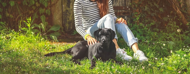 Black labrador puppy on the grass with owner. happy dog sitting in the park