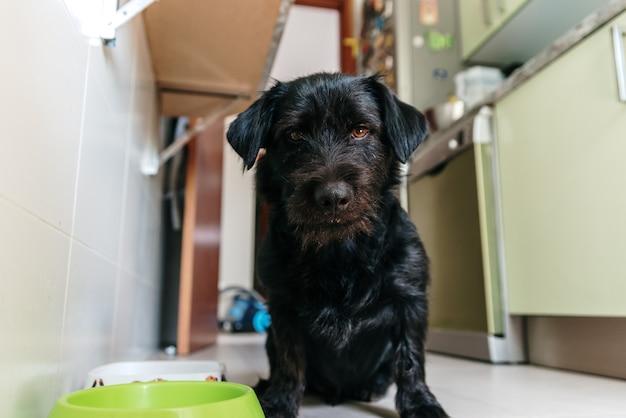 フードボウルの横でポーズをとっている黒いラブラドール/ tekkelミックス犬。