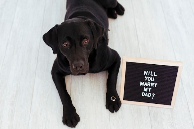 Black labrador with letter board and ring. wedding concept
