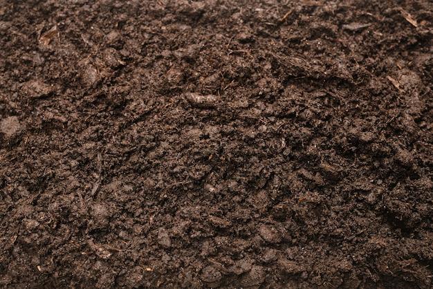 식물 배경에 대 한 검은 땅. 평면도.