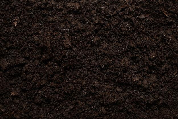 植物の背景の黒い土地
