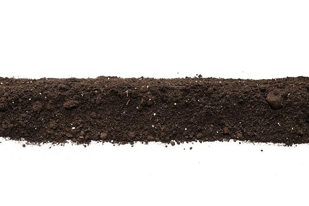 흰색 배경에 고립 된 식물에 대 한 검은 땅. 액자. 공간을 복사합니다.