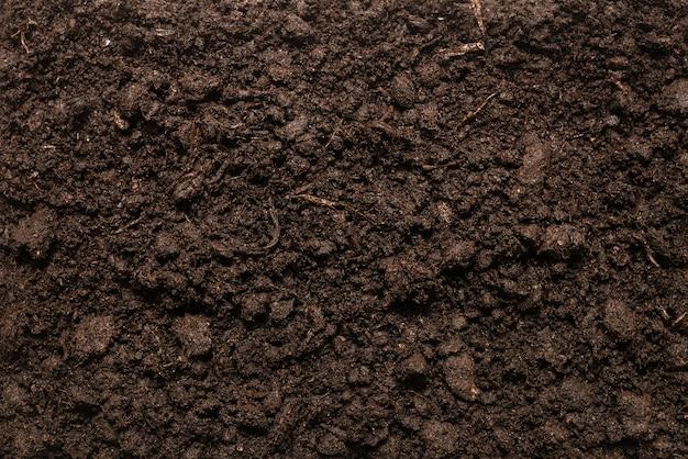 Черная земля для растений