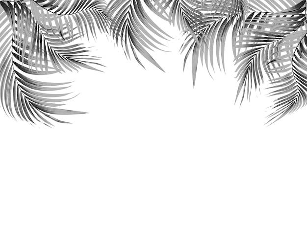白い背景の上のヤシの木の黒い葉
