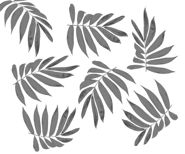 Black leaf of palm tree isolated on white