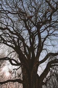 검은 잎이없는 나무