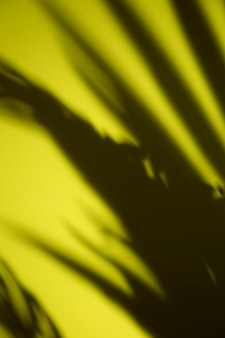 Black leaves shadow on yellow backdrop