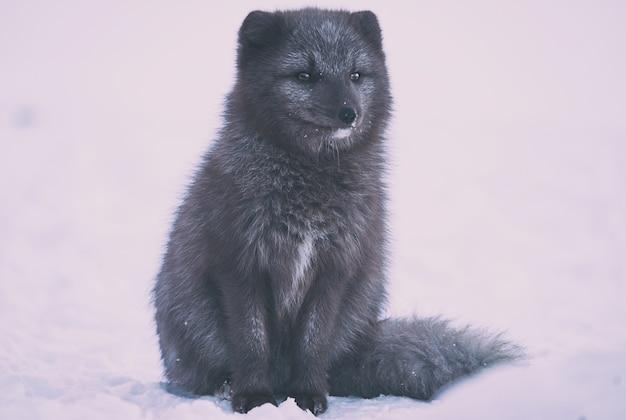 白い表面に黒い足の動物