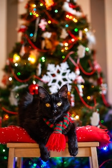 Black little cat maine coon with red and green scarf near christmas tree