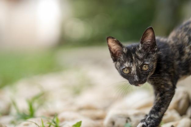 フィールドを歩いてカメラを見ている黒い子猫