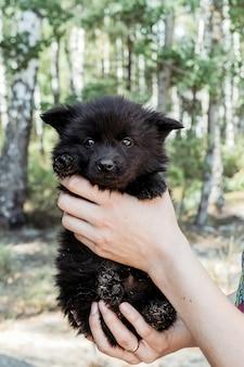 Черный маленький щенок в руках девушки.