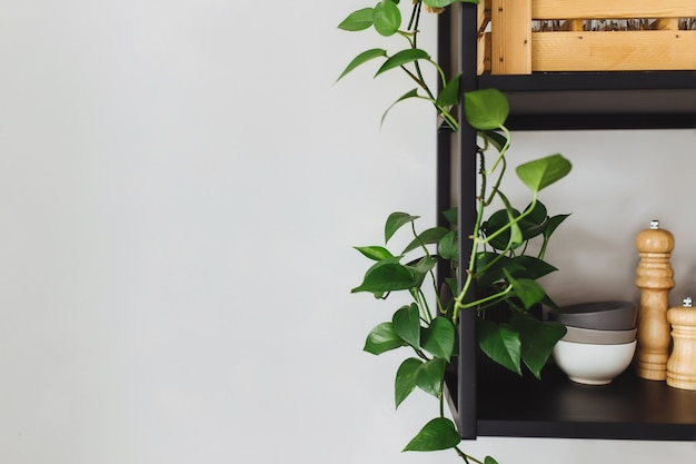 ロフトスタイルの灰色のコンクリートの壁にあるキッチンの黒い金属製の棚。緑の植木鉢。