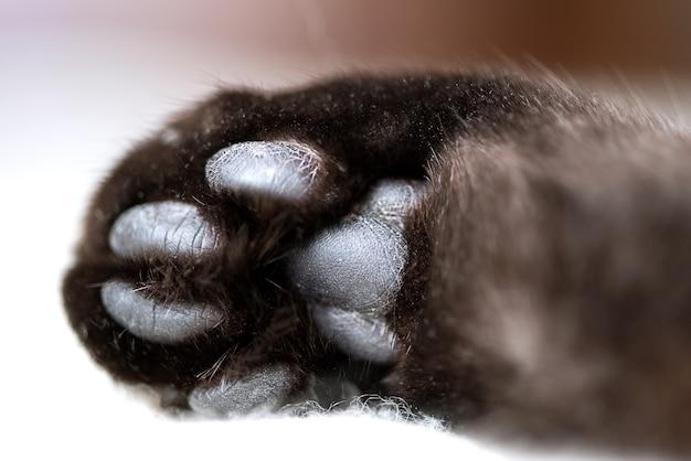 Черные подушечки на кошачьей лапе крупным планом