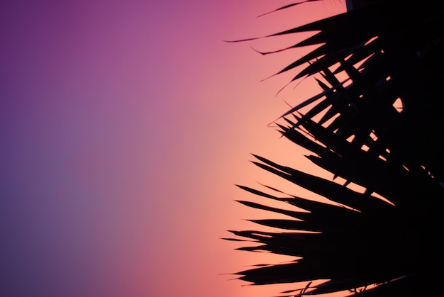 Black palm tree on the pink violet background