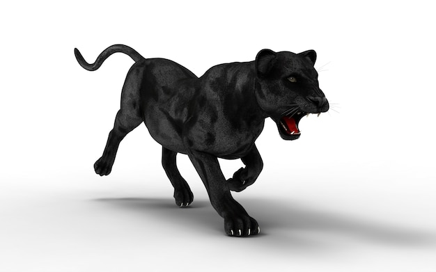 Black panther isolate on white background, black tiger, 3d illustration, 3d render