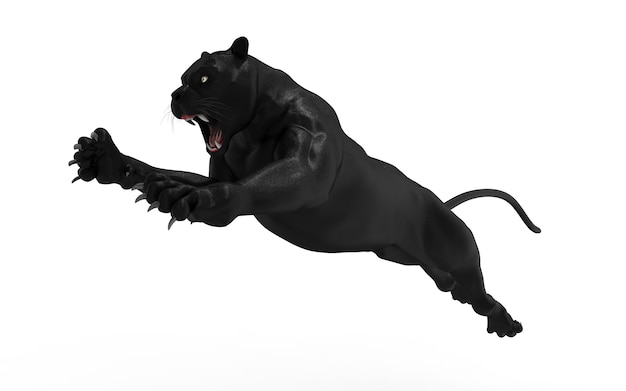 Black panther isolate on white background, black tiger